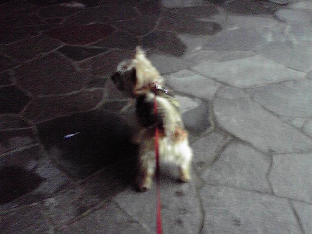10月7日夜のお散歩犬