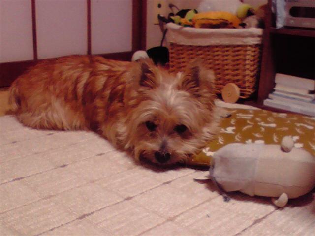 10月8日眠くない犬