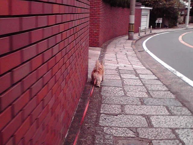 10月9日散歩犬