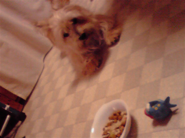 10月10日ごはん食べない犬
