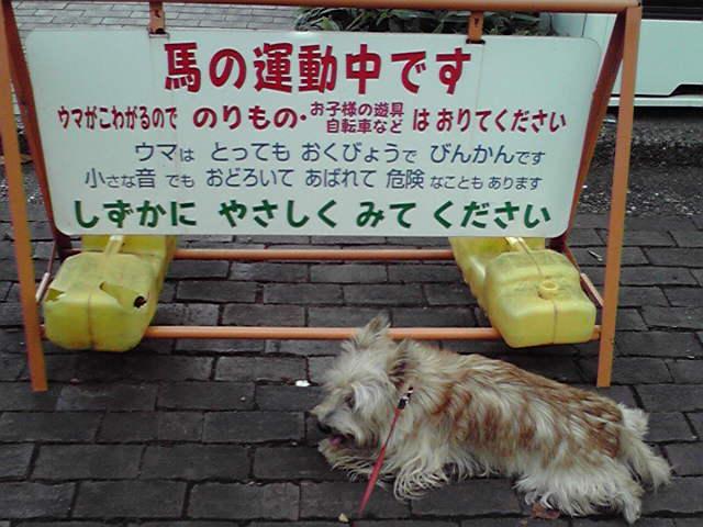 10月11日根岸森林公園犬ふたたび
