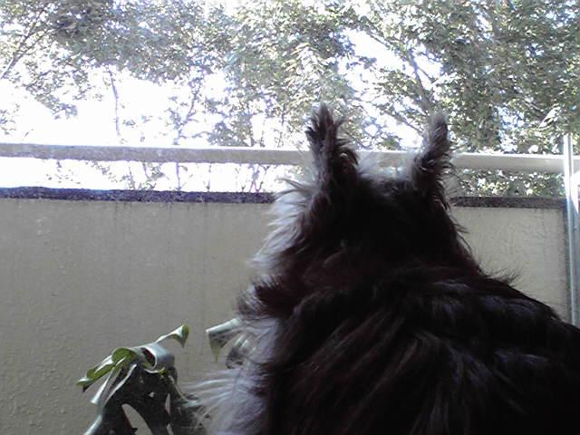 10月12日秋晴れ犬