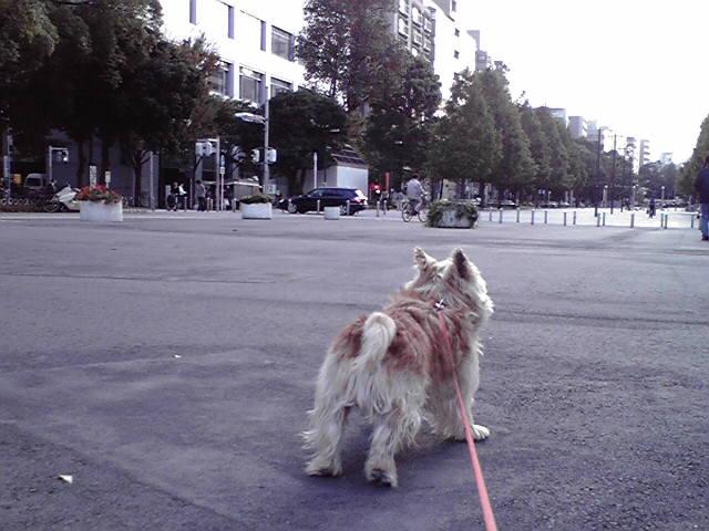 本日のお散歩