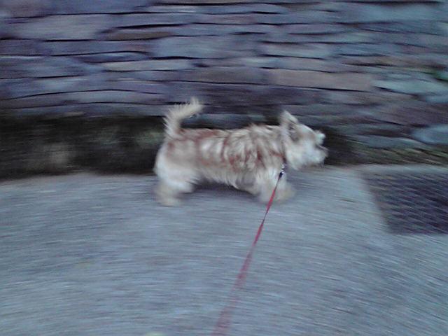 10月13日秋の夕日犬