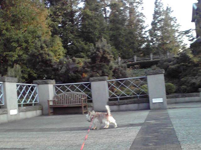 10月15日郵便局犬