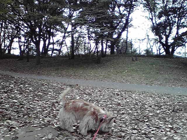 10月17日根岸森林公園たびたび犬