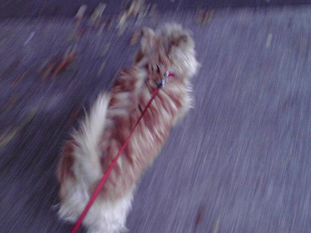 10月18日小公女を応援する犬