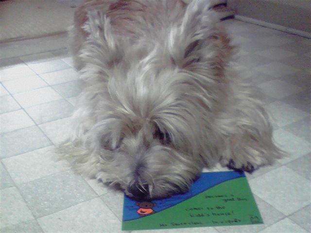 10月19日お手紙犬