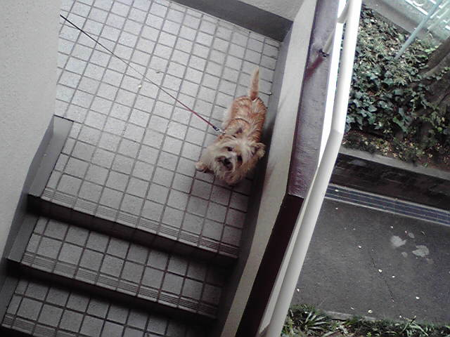 10月22日慌てる犬
