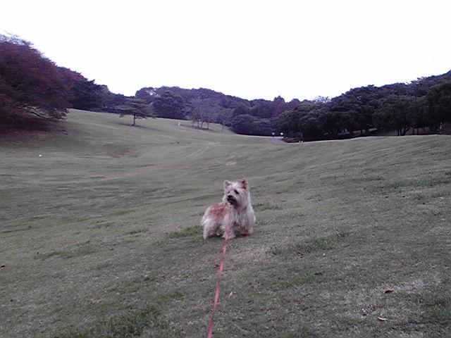 10月25日曇り犬