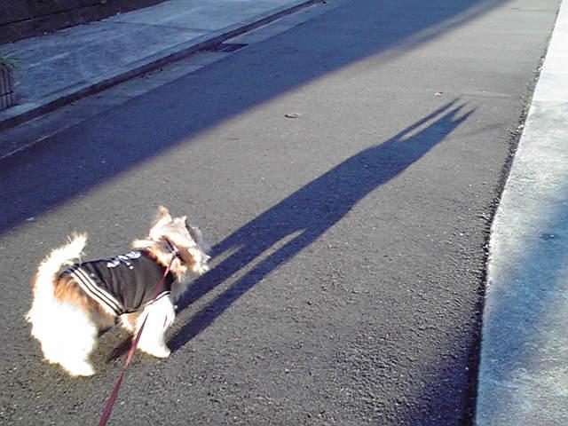 ケアンテリアの影