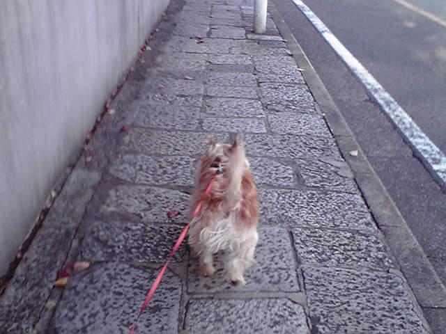 10月28日怒られる犬