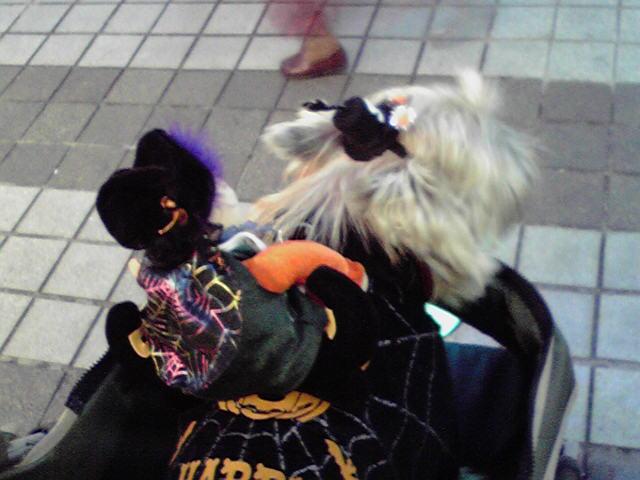 10月30日元町ハロウィン犬