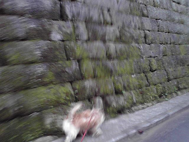 11月1日ワンワンワン犬