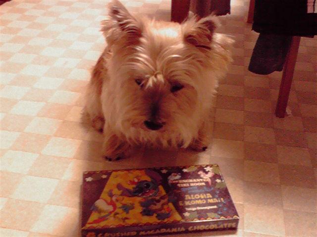 11月2日お土産犬