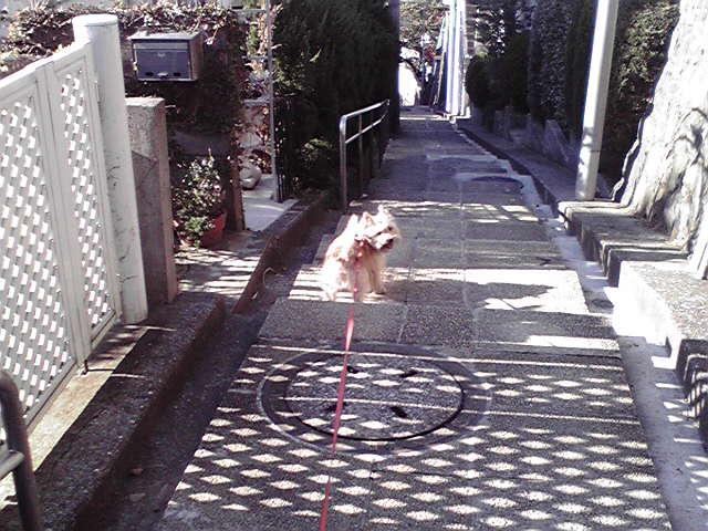 11月3日文化の犬