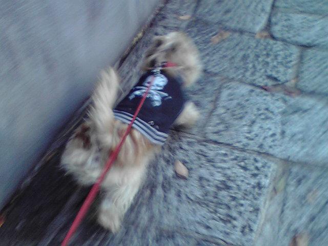 11月4日東へ行く犬