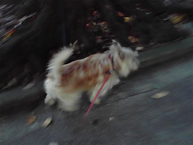 11月8日元町公園へ行く犬