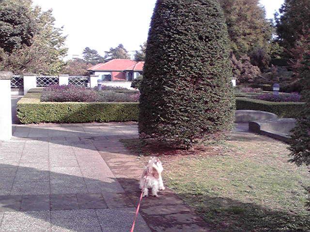 11月9日妥協する犬