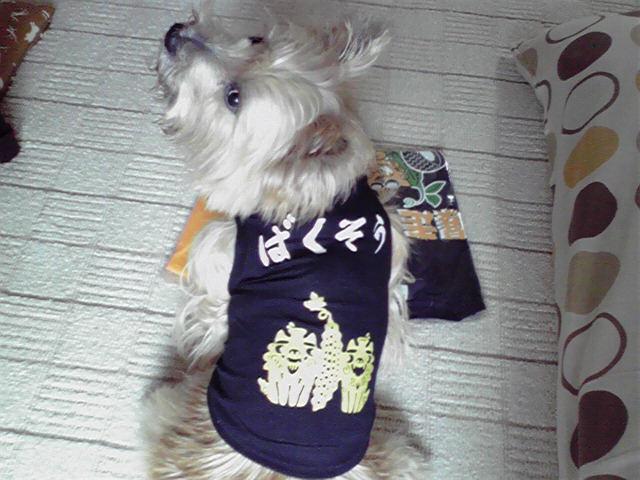 11月10日お土産犬