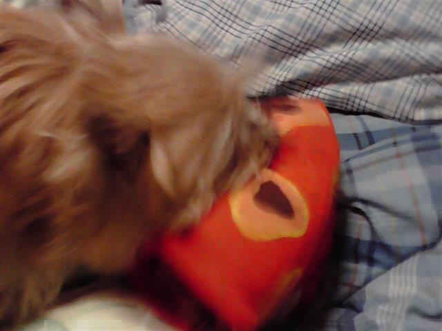 11月11日欲求不満の塊犬
