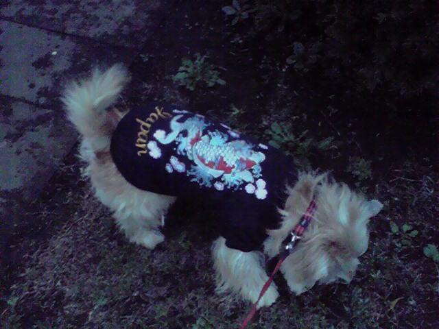 11月12日寒い犬