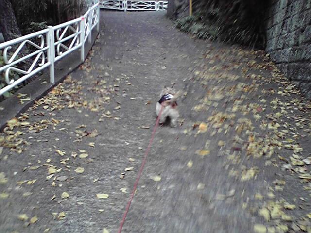 11月13日午後から雨だって犬