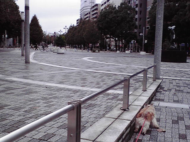 11月14日雨上がりの犬