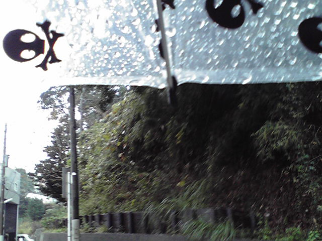 11月17日雨のちお風呂犬