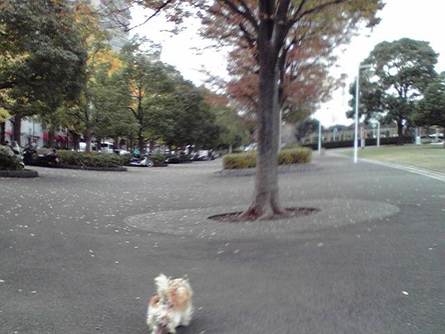 11月20日とりあえず脱稿犬