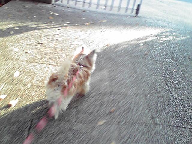 11月20日土曜日の犬