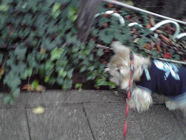 11月21日おめめがかゆい犬
