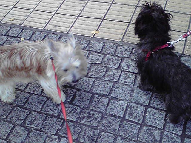 11月23日チャーリーくんと遊ぶ犬