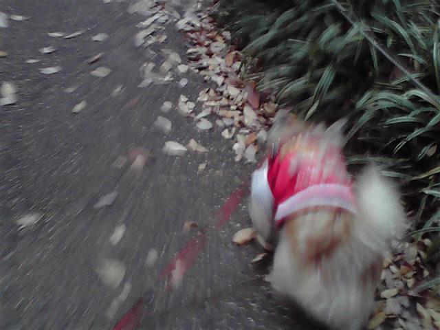 11月24日病院へ行く犬