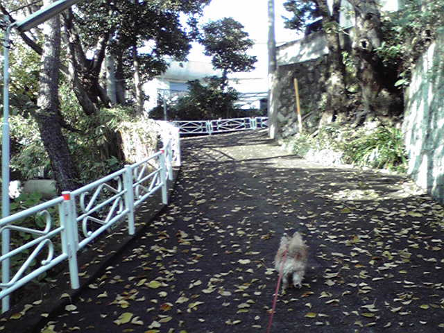 11月25日秋深い犬