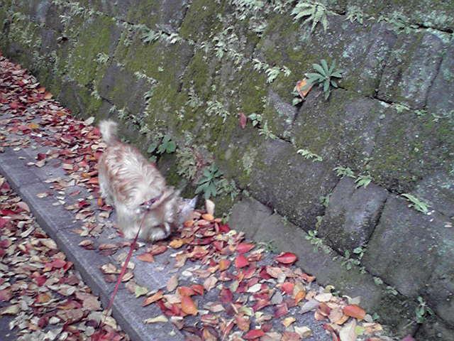 11月27日のんびり犬