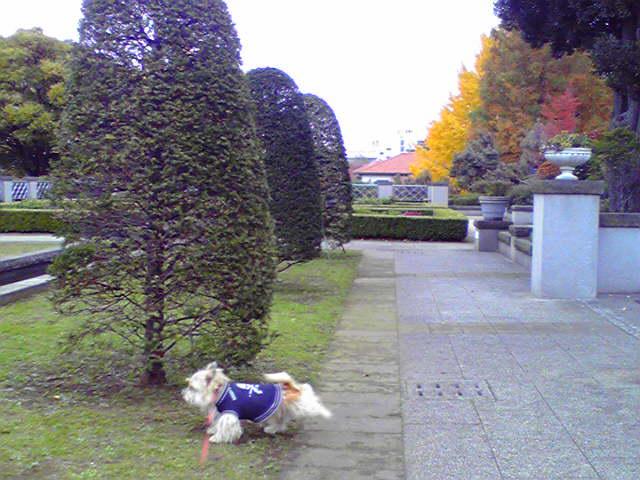 11月29日紅葉犬