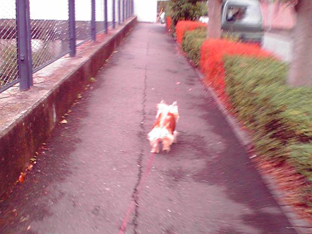 11月30日セーター犬