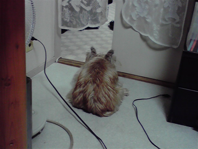 12月3日冷たい雨犬