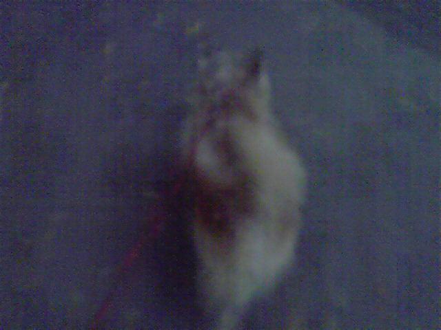 12月4日黄昏時犬