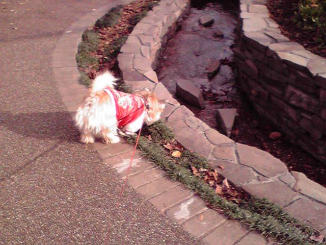 12月10日お誕生日犬