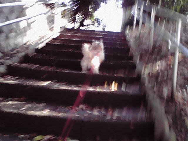 12月12日雨上がりお散歩犬