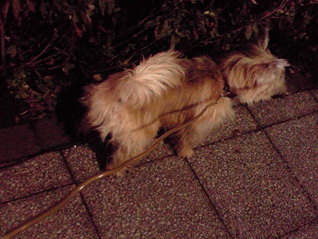 12月15日夜散歩犬