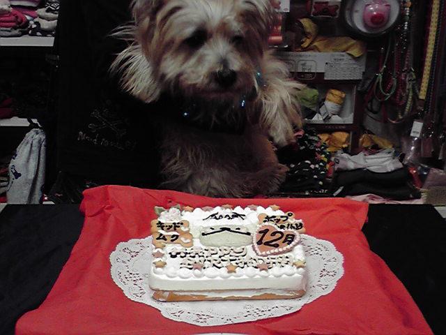 12月19日お誕生会犬