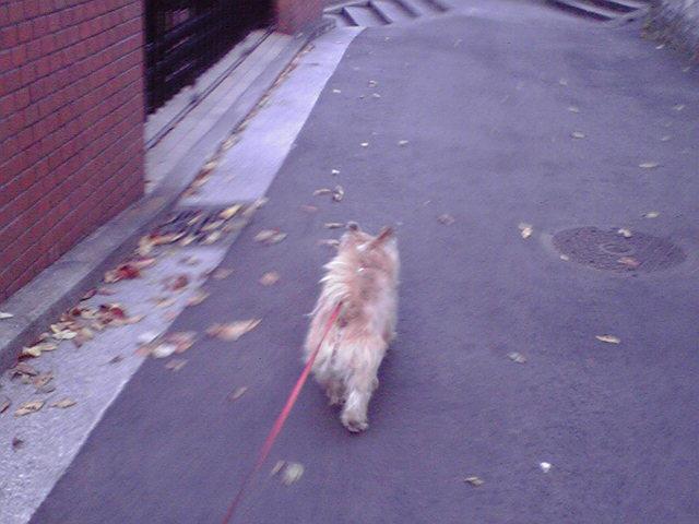 12月21日一段落犬