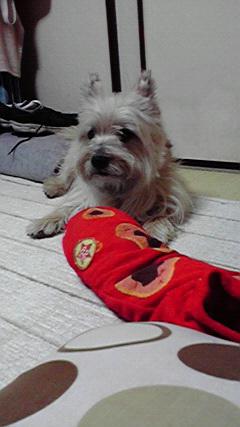 12月22日怒る犬