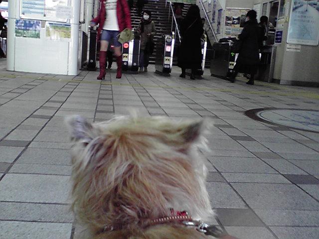 12月26日バーコーが来るぅ犬