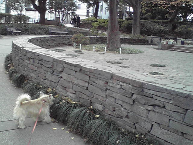 12月27日師走犬