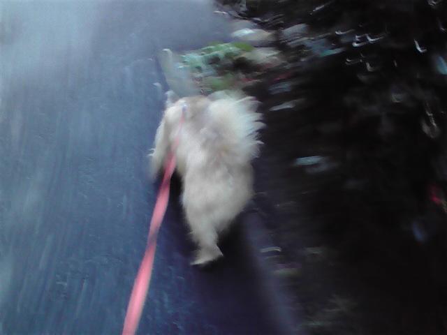 12月28日銀行犬