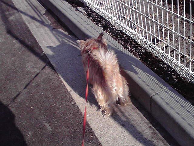 12月29日買い物犬